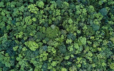 Warum wir Bäume brauchen