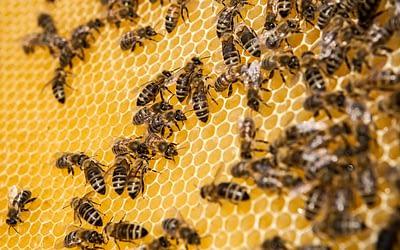 Die Biene als Sinnbild für nachhaltiges Engagement in Unternehmen